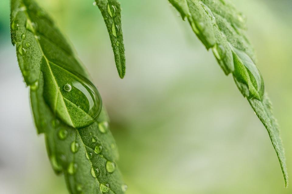 Marijuana Mania: The Bubble Is Here