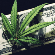 marijuana cannabis money
