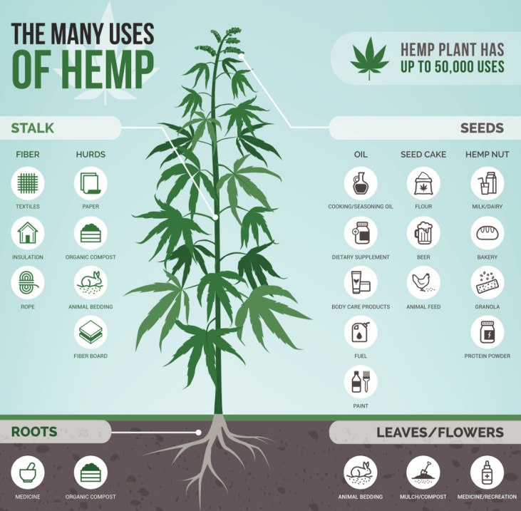 hemp uses infographic