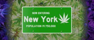 NY cannabis