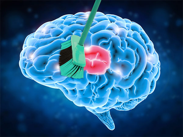 nvj puromind brain