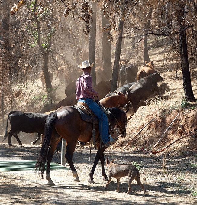 twa california horse