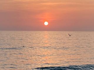 wd sunset