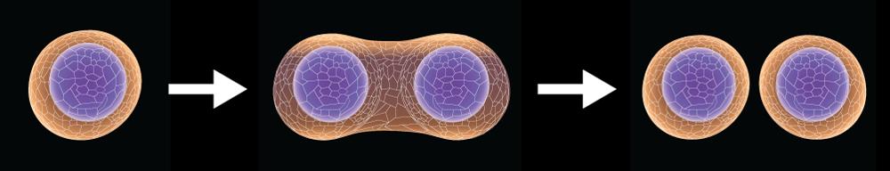 tao anti aging cells