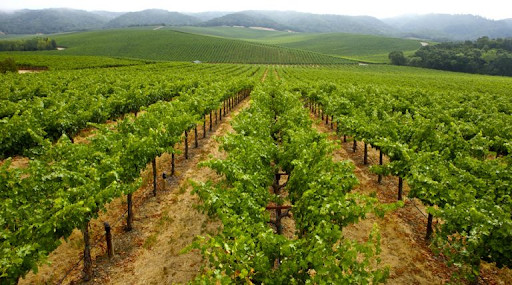 gall winery vineyard