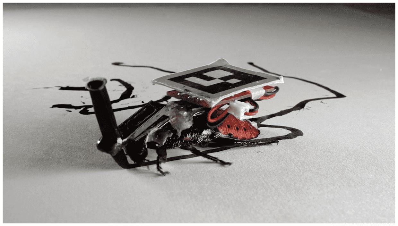Robot Roach Image