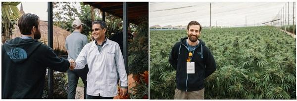 cannabis farm colombia JW