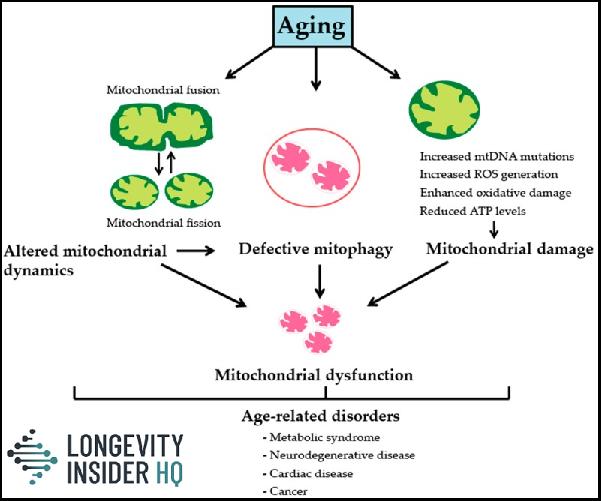 Mitochondria image