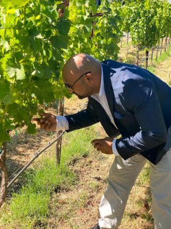 Anil picking grapes